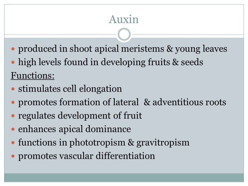 Auxin produced in shoot apical meristems & young leaves