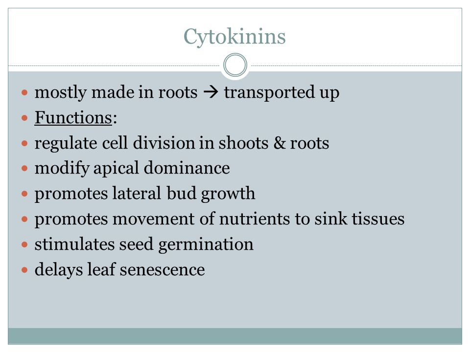 Cytokinins mostly made in roots  transported up Functions: