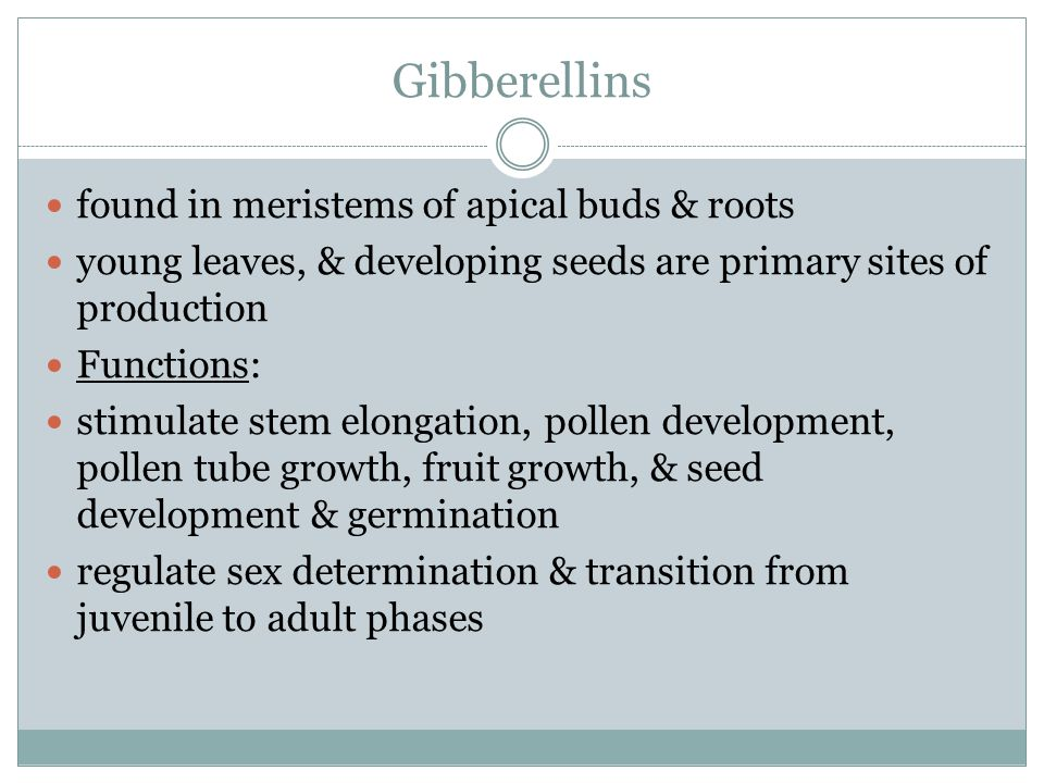 Gibberellins found in meristems of apical buds & roots