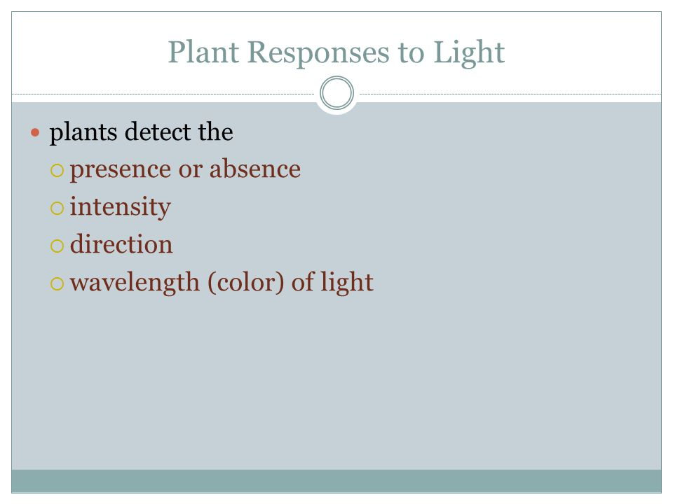 Plant Responses to Light