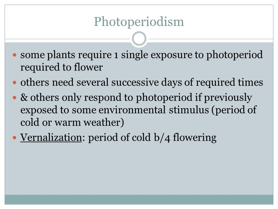 Photoperiodism some plants require 1 single exposure to photoperiod required to flower. others need several successive days of required times.