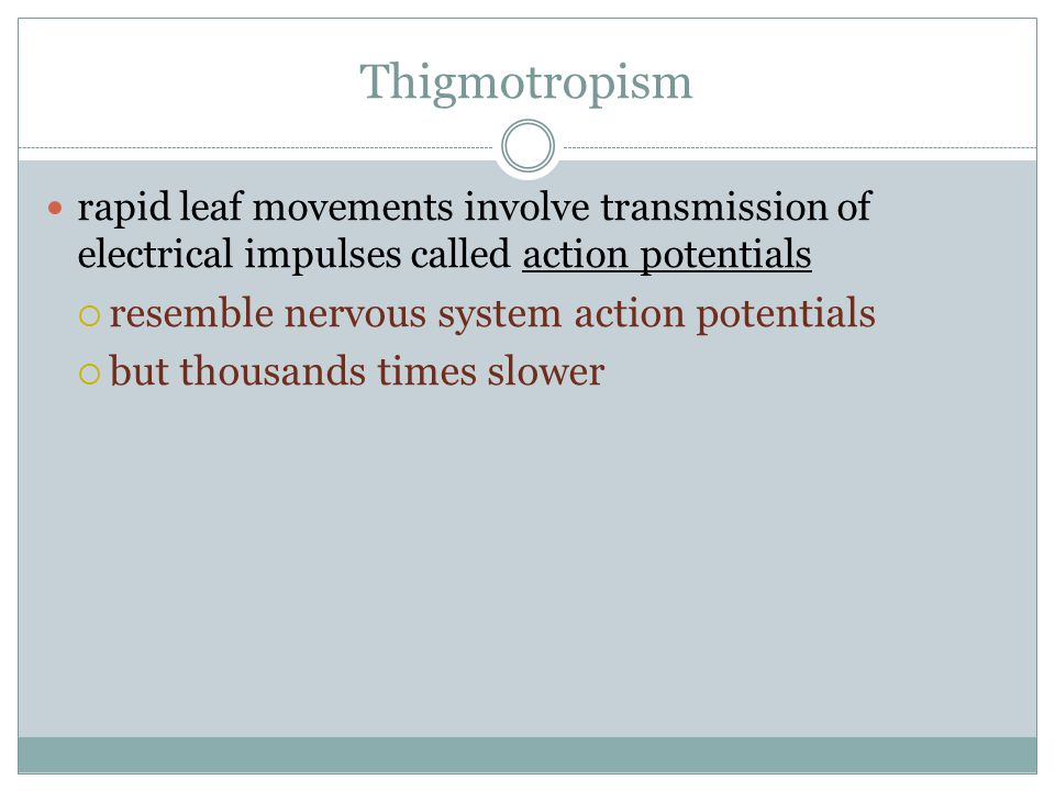 Thigmotropism resemble nervous system action potentials