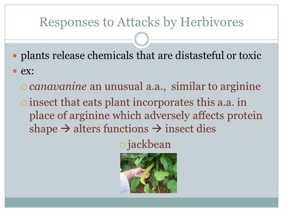 Responses to Attacks by Herbivores