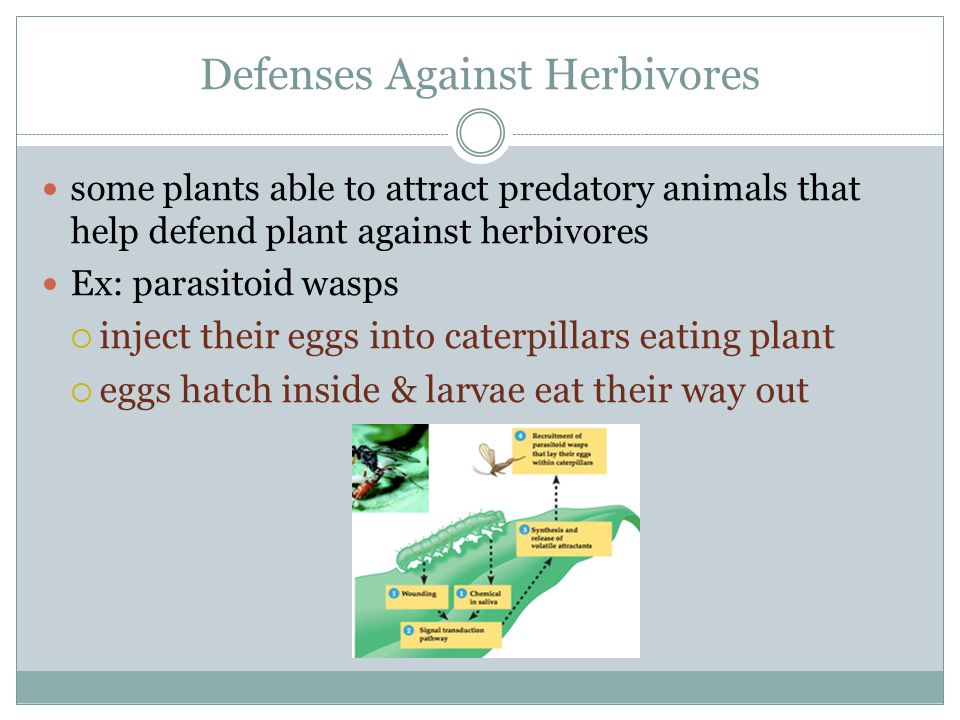 Defenses Against Herbivores