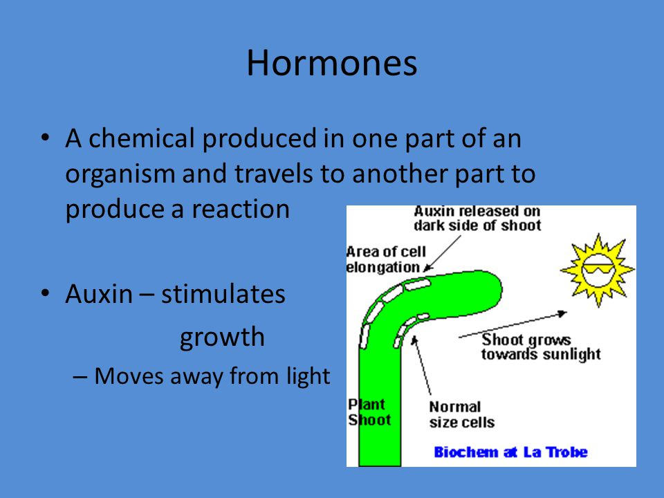 Hormones A chemical produced in one part of an organism and travels to another part to produce a reaction.