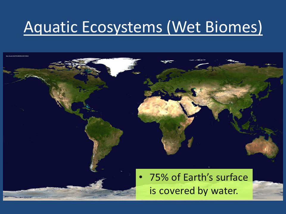 Aquatic Ecosystems (Wet Biomes)
