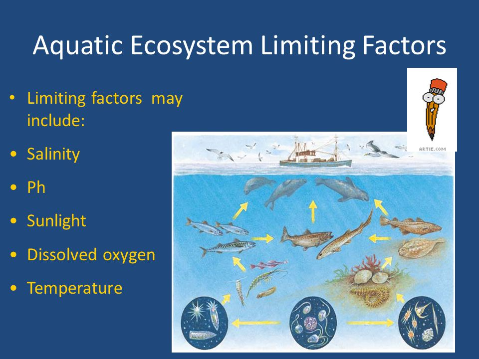 Aquatic Ecosystem Limiting Factors