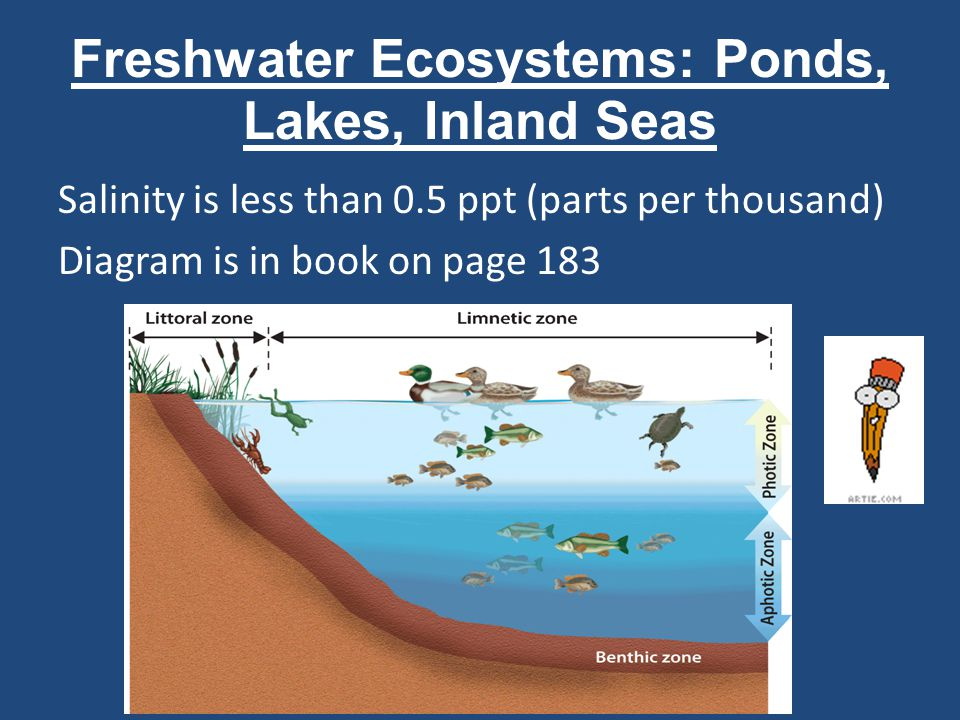 Freshwater Ecosystems: Ponds, Lakes, Inland Seas