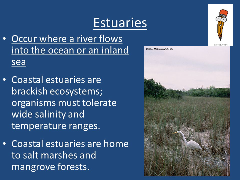 Estuaries Occur where a river flows into the ocean or an inland sea