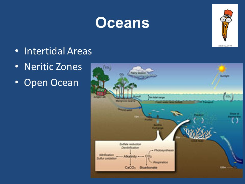 Oceans Intertidal Areas Neritic Zones Open Ocean