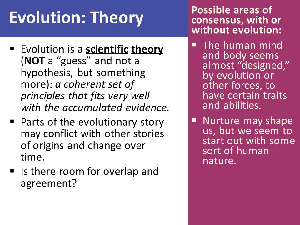 Evolution: Theory Possible areas of consensus, with or without evolution:
