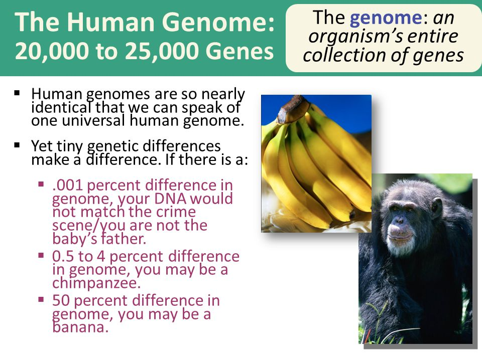 The Human Genome: 20,000 to 25,000 Genes