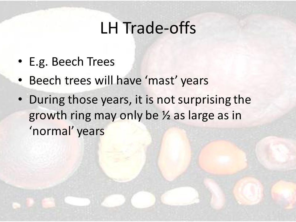 LH Trade-offs E.g. Beech Trees Beech trees will have 'mast' years