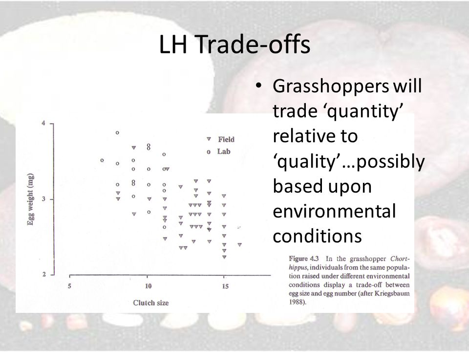 LH Trade-offs Grasshoppers will trade 'quantity' relative to 'quality'…possibly based upon environmental conditions.