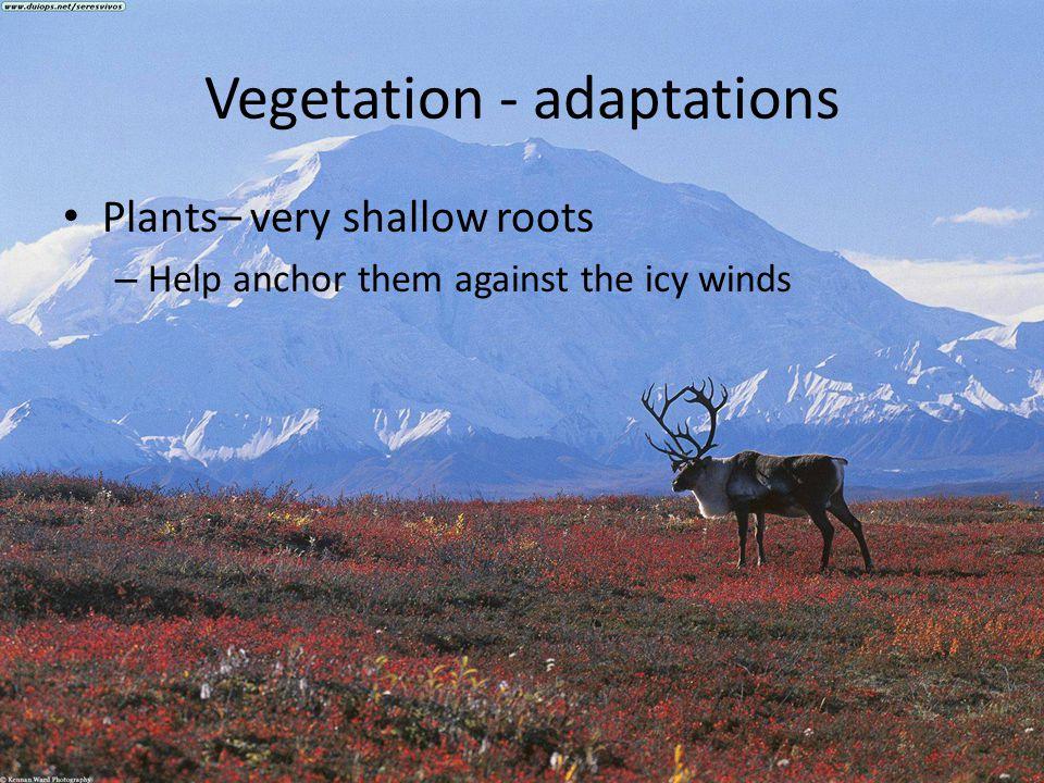 Vegetation - adaptations