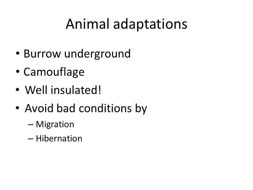 Animal adaptations Burrow underground Camouflage Well insulated!