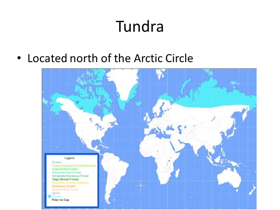 Tundra Located north of the Arctic Circle