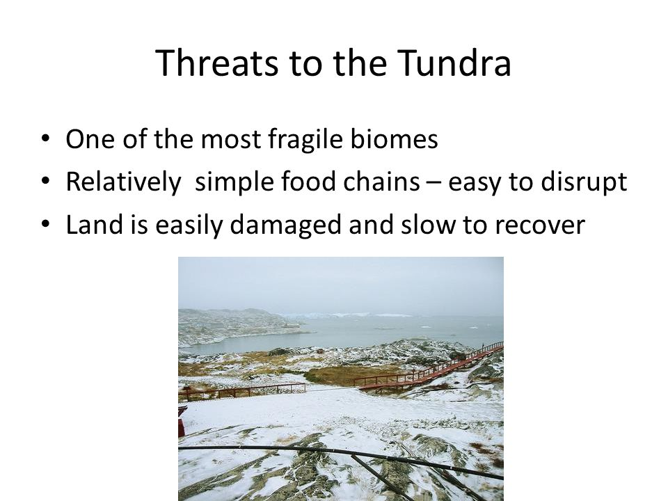 Threats to the Tundra One of the most fragile biomes