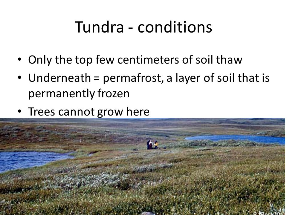 Tundra - conditions Only the top few centimeters of soil thaw