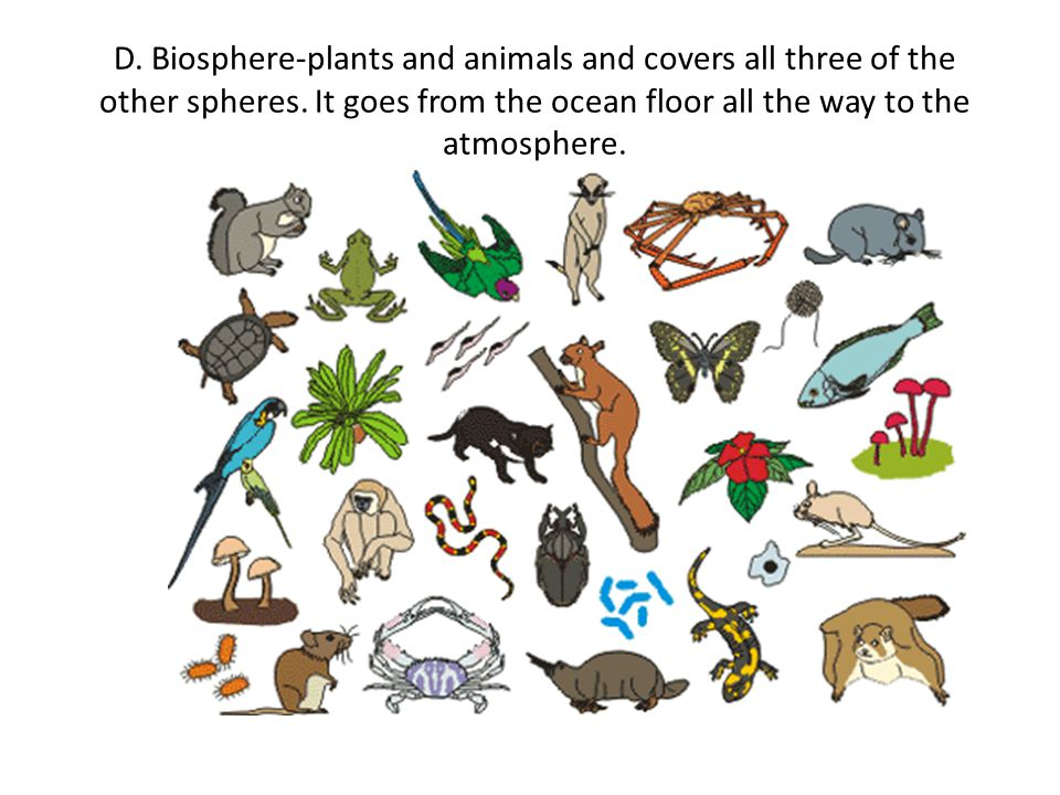 D. Biosphere-plants and animals and covers all three of the other spheres.