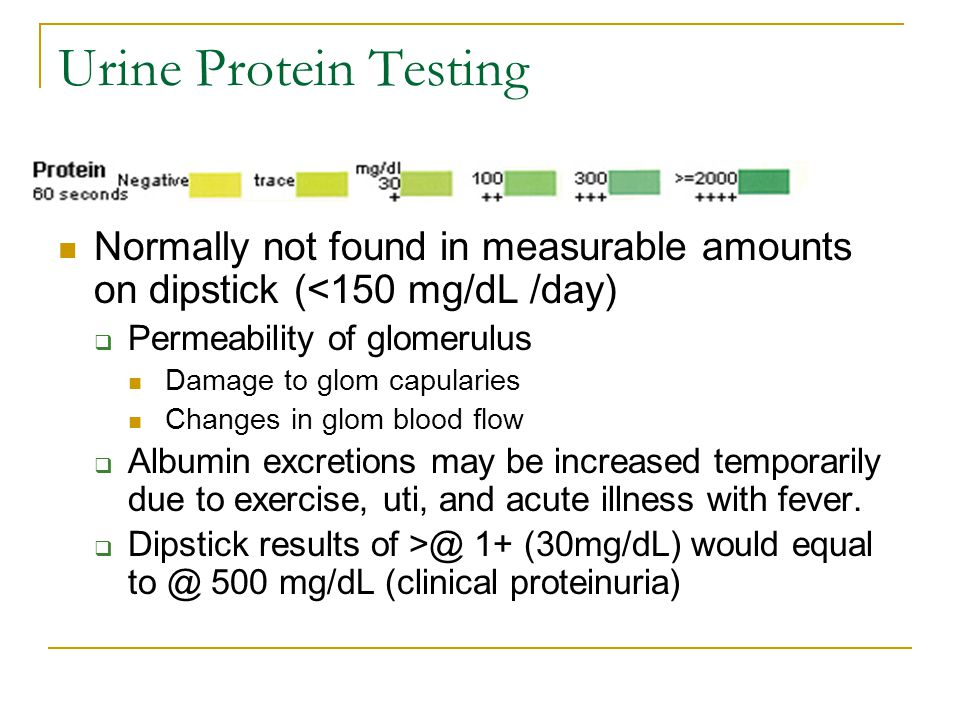 Urine Protein Testing Normally not found in measurable amounts on dipstick (<150 mg/dL /day) Permeability of glomerulus.