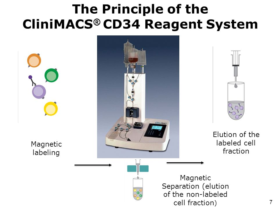 The Principle of the CliniMACS® CD34 Reagent System
