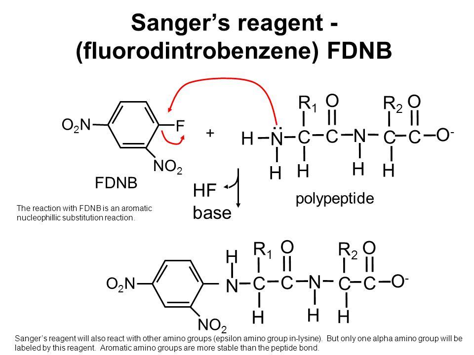 Sanger's reagent - (fluorodintrobenzene) FDNB