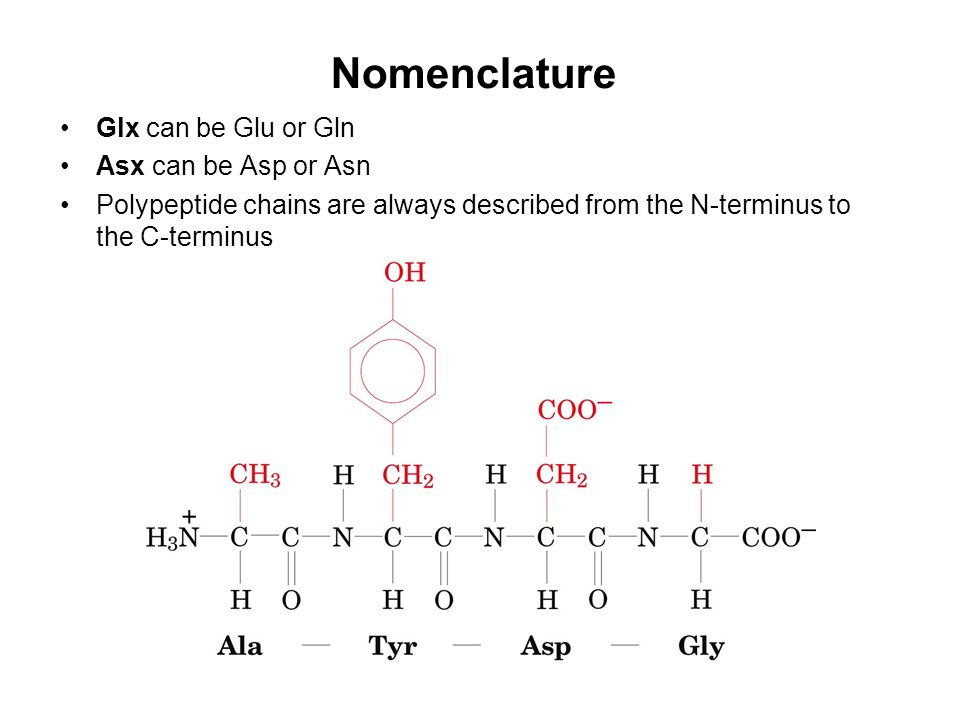 Nomenclature Glx can be Glu or Gln Asx can be Asp or Asn