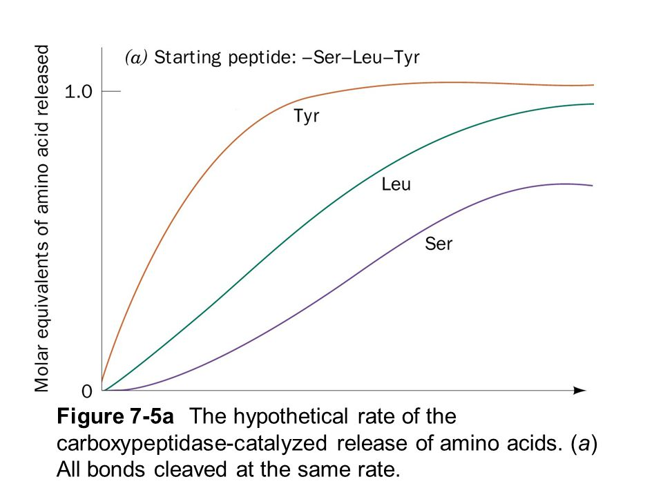 Figure 7-5a The hypothetical rate of the carboxypeptidase-catalyzed release of amino acids.