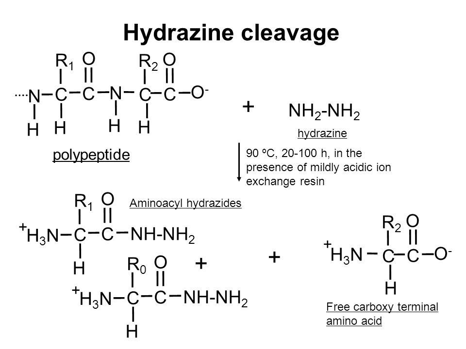 Hydrazine cleavage + + + O R1 R2 O- C N NH2-NH2 H O R1 R2 O C NH-NH2