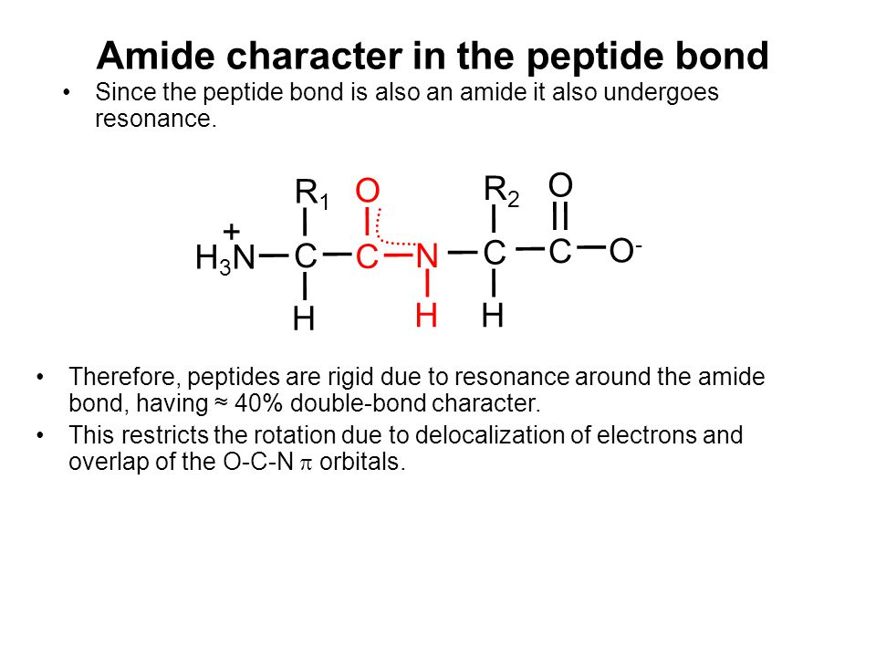 Amide character in the peptide bond