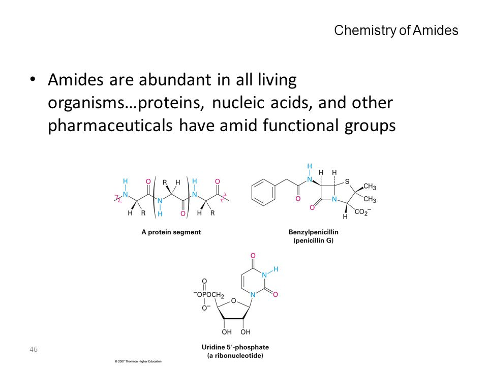 Chemistry of Amides Amides are abundant in all living organisms…proteins, nucleic acids, and other pharmaceuticals have amid functional groups.
