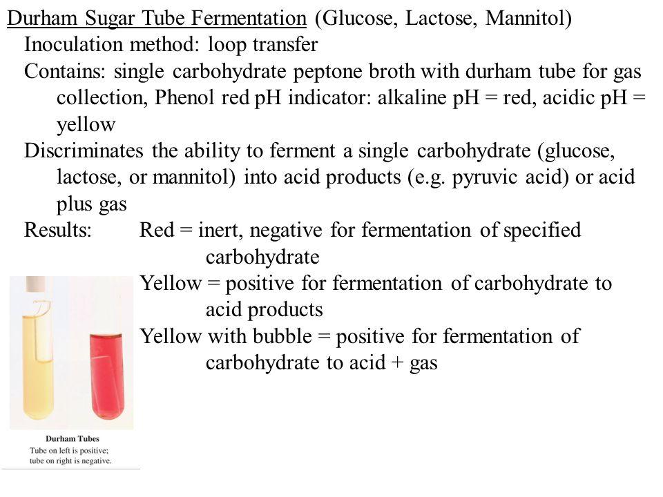 Durham Sugar Tube Fermentation (Glucose, Lactose, Mannitol)