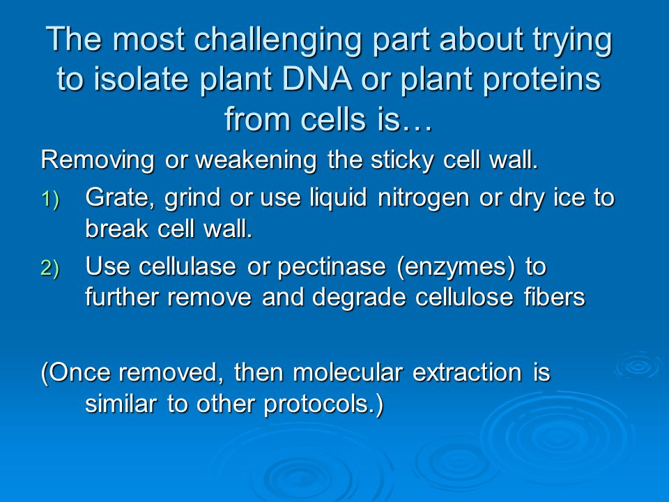 The most challenging part about trying to isolate plant DNA or plant proteins from cells is…