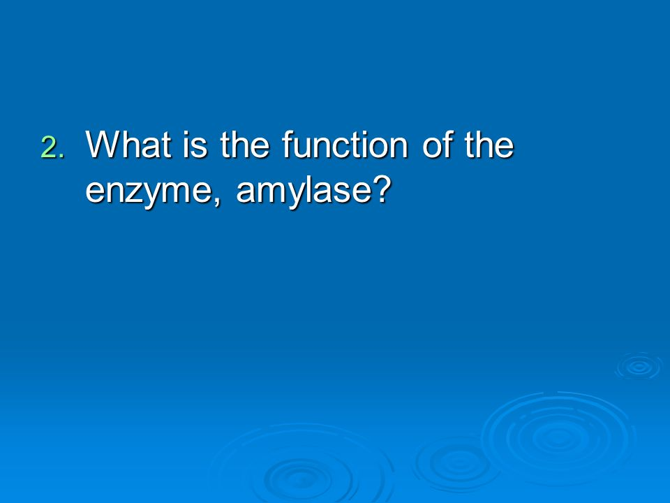 What is the function of the enzyme, amylase