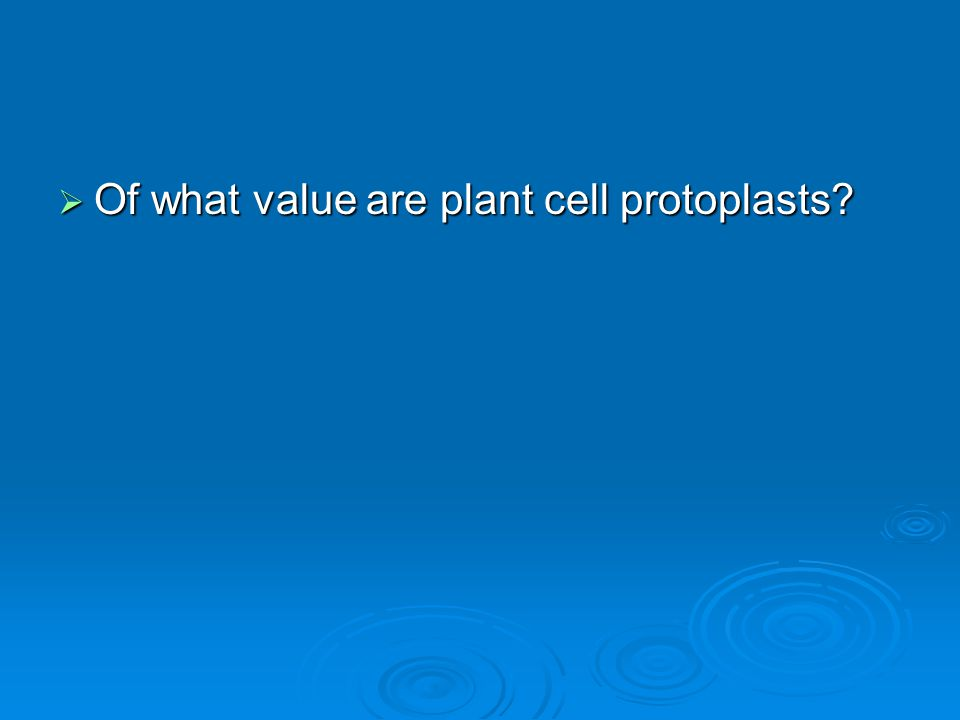 Of what value are plant cell protoplasts