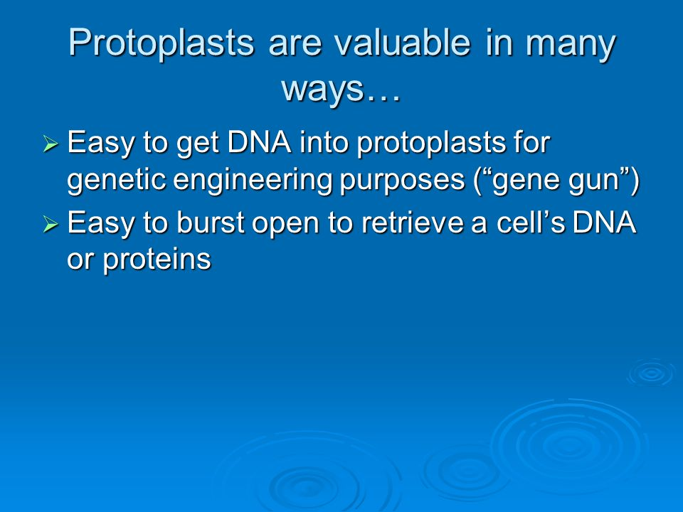 Protoplasts are valuable in many ways…