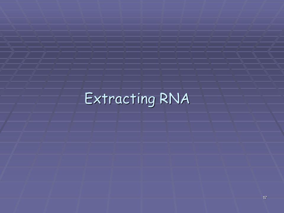 Extracting RNA