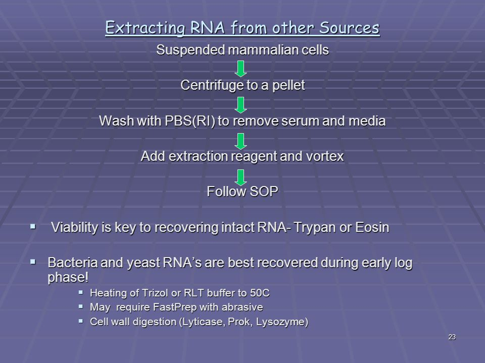 Extracting RNA from other Sources