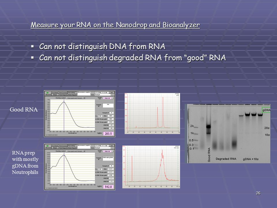 Can not distinguish DNA from RNA