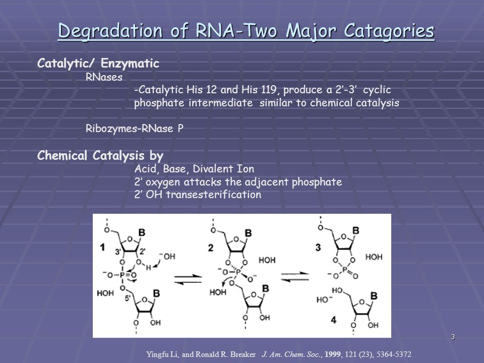 Degradation of RNA-Two Major Catagories
