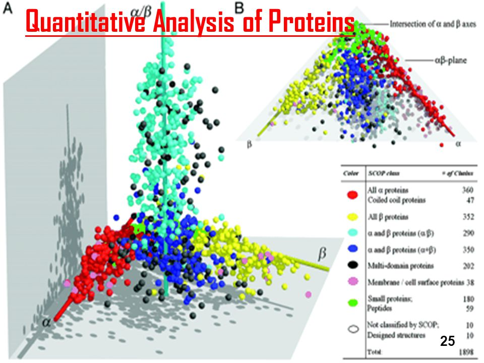 Quantitative Analysis of Proteins