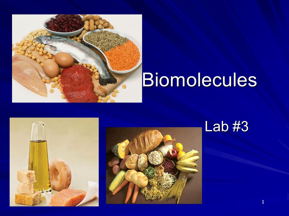Biomolecules Lab #3