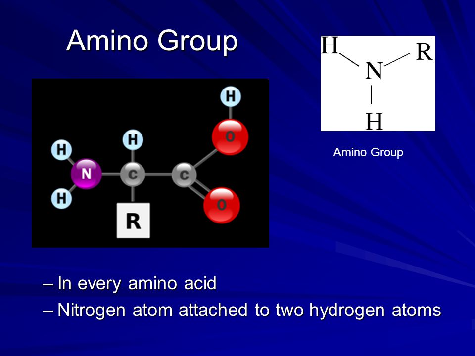 Amino Group In every amino acid