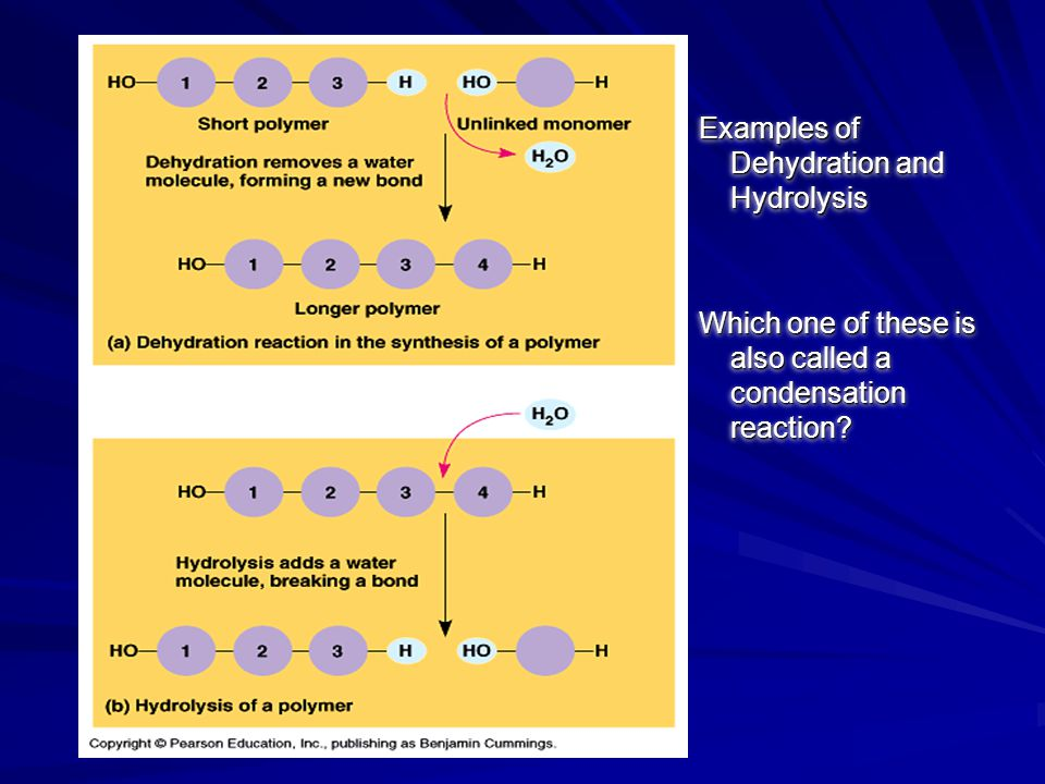 Examples of Dehydration and Hydrolysis