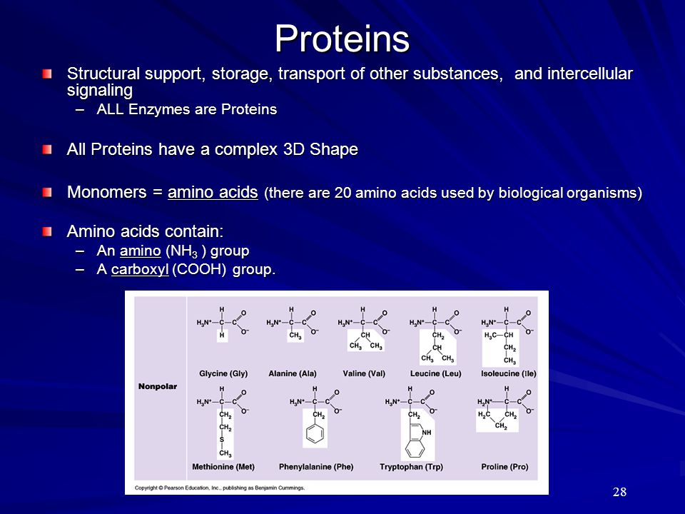 Proteins Structural support, storage, transport of other substances, and intercellular signaling. ALL Enzymes are Proteins.