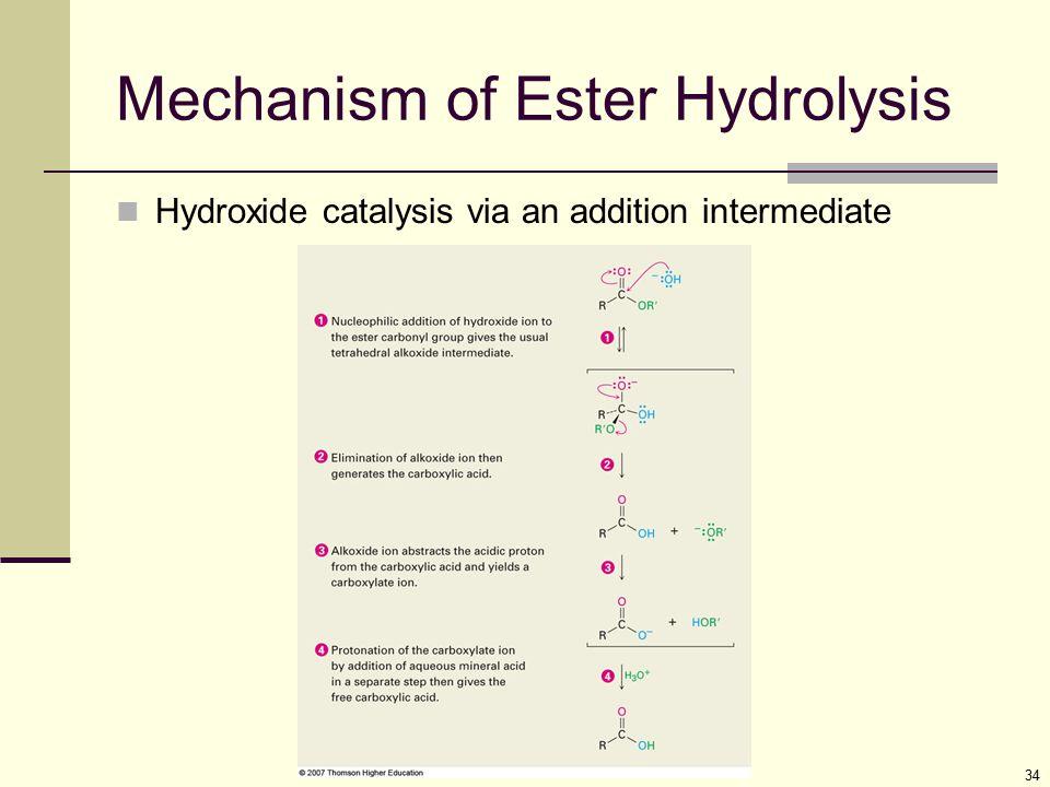 Mechanism of Ester Hydrolysis