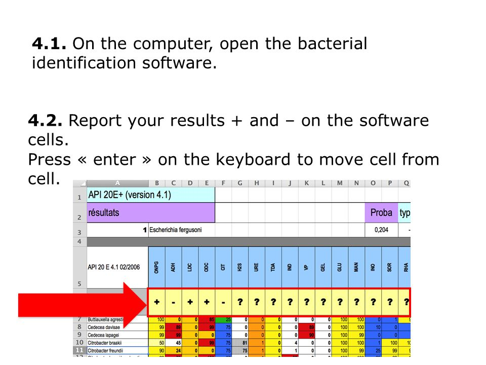 4.1. On the computer, open the bacterial identification software.