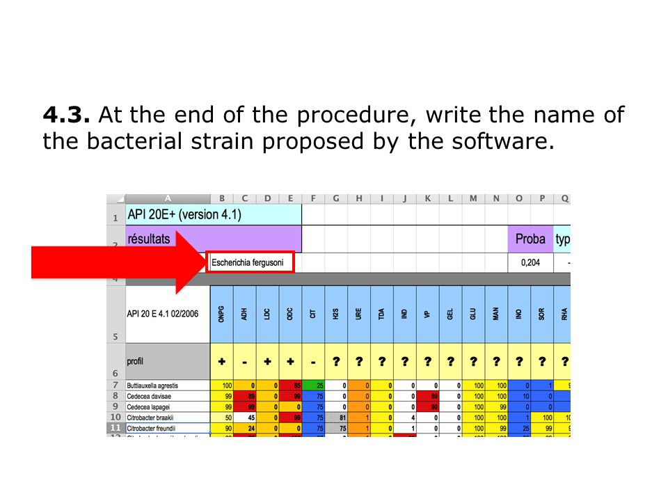 4.3. At the end of the procedure, write the name of the bacterial strain proposed by the software.
