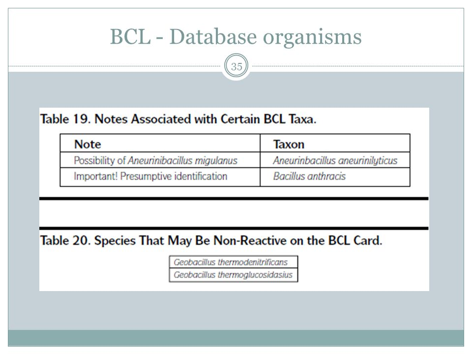 BCL - Database organisms